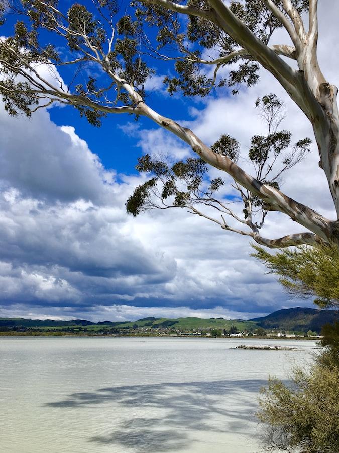 A click in Rotorua