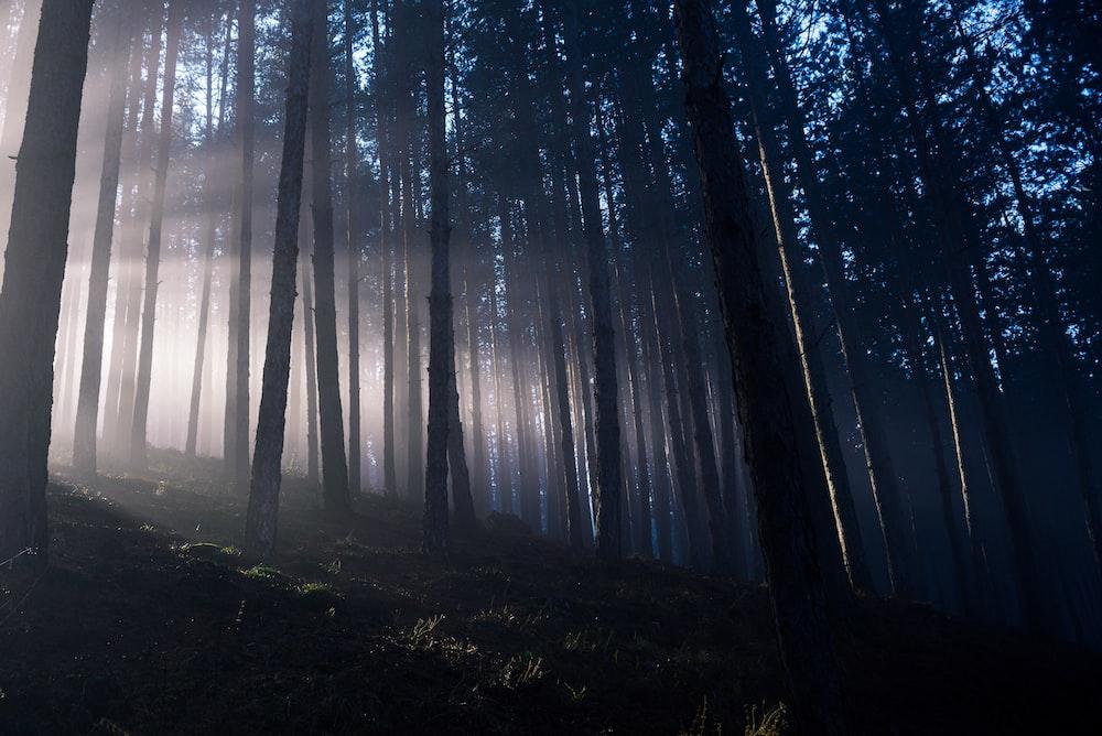bare tree foggy scenery