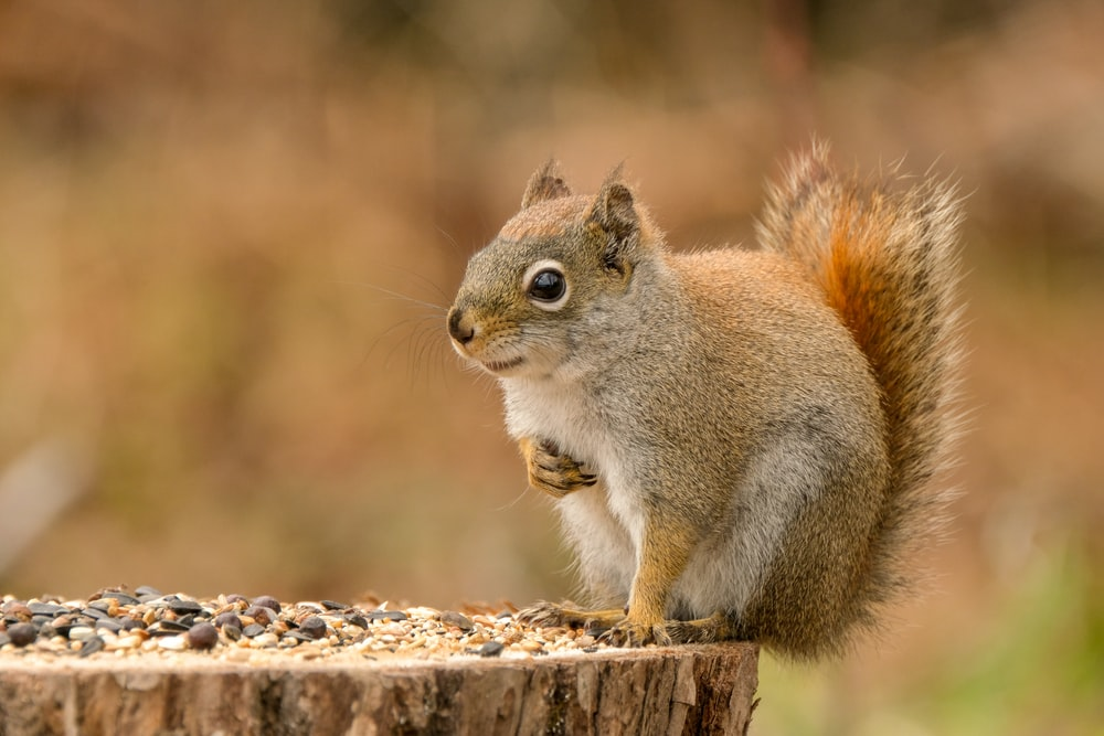 brown and white squirrel close-up photography