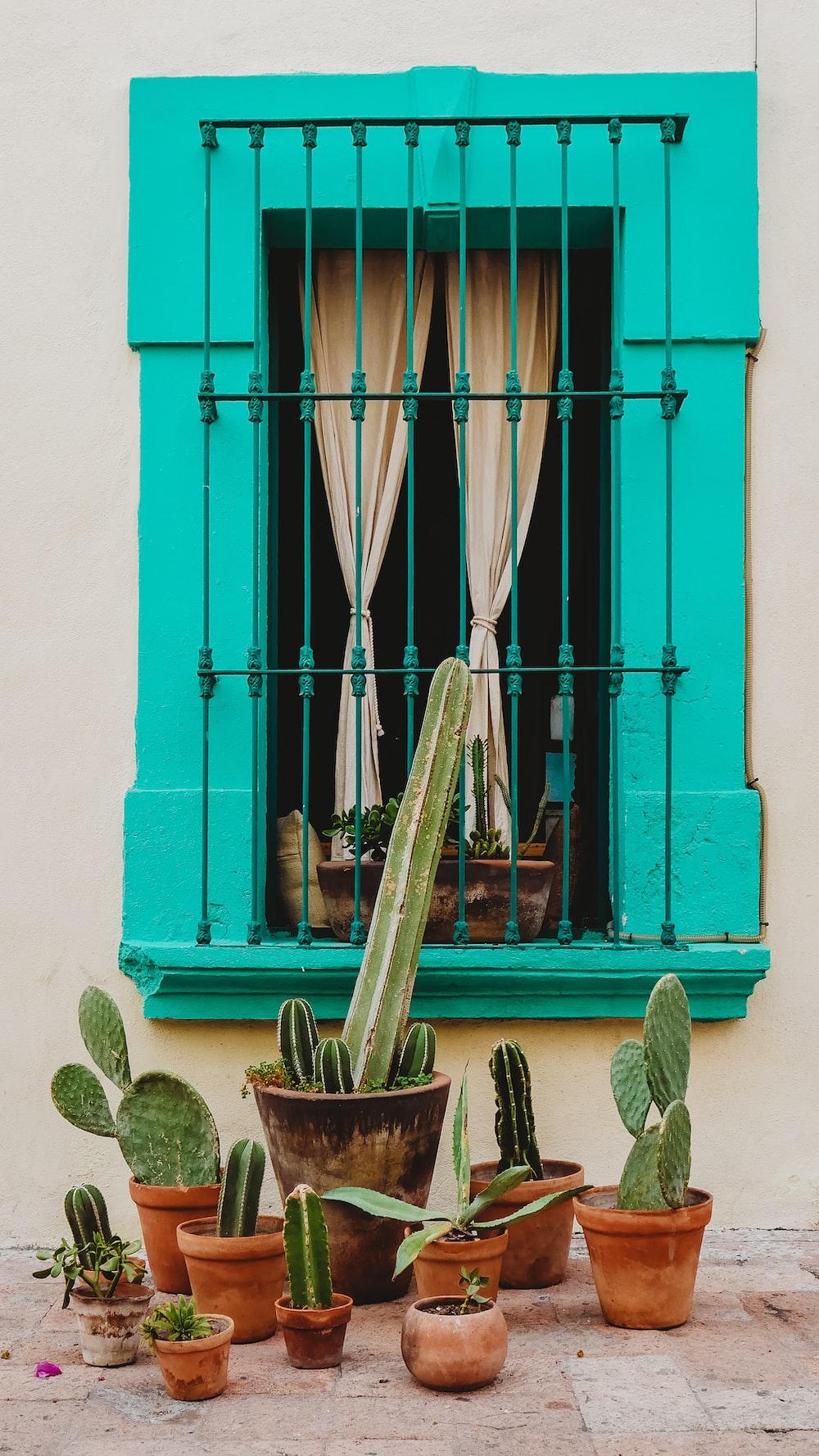 cactus near window