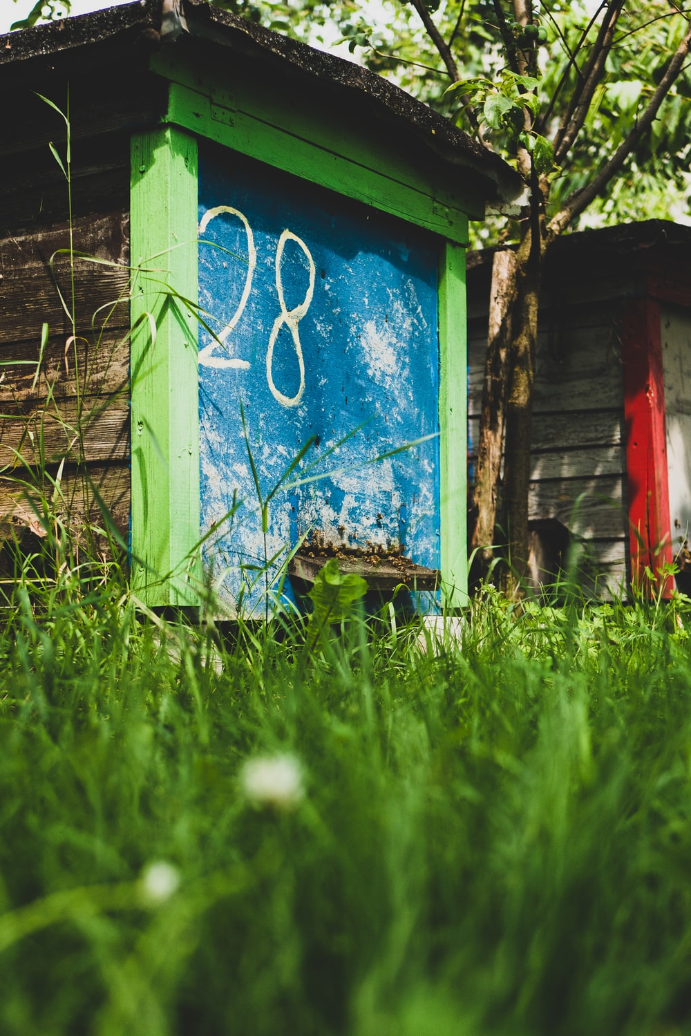 blue and green painted wood shed near tree
