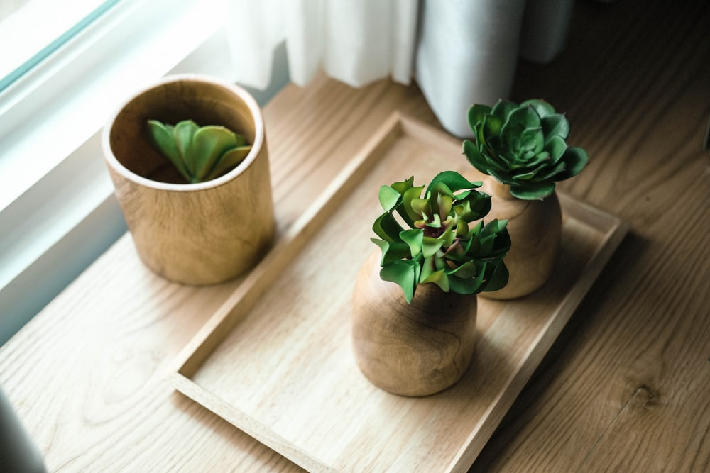 three green leafed plants
