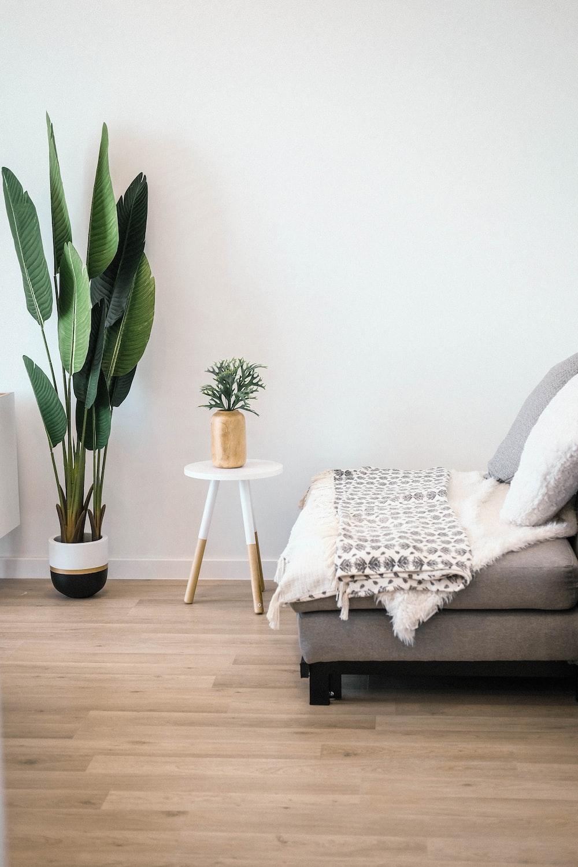 remarkable bedroom white walls black furniture | green leaf plant beside wall photo – Free Furniture Image ...