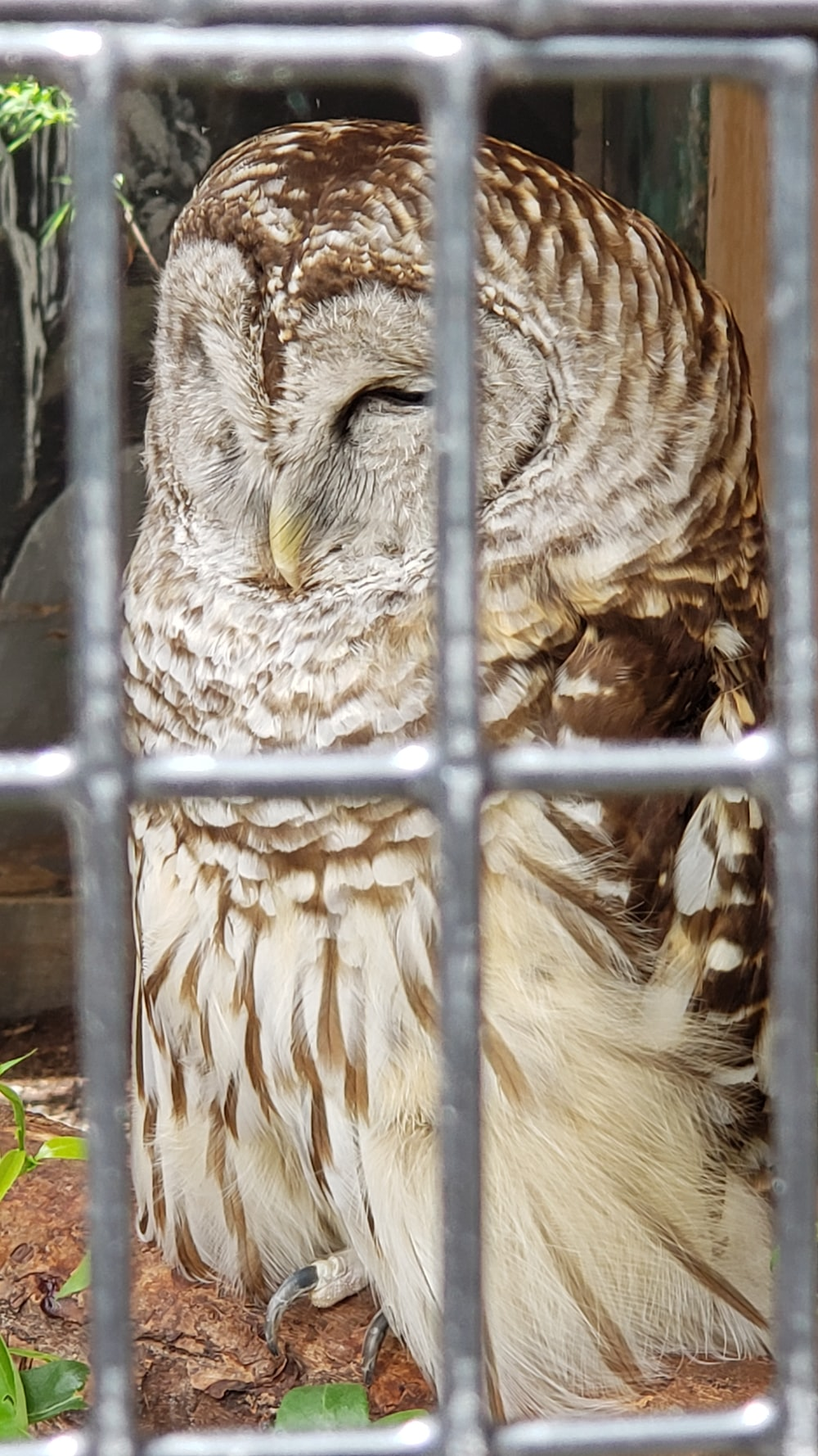 brown owl inside cage '