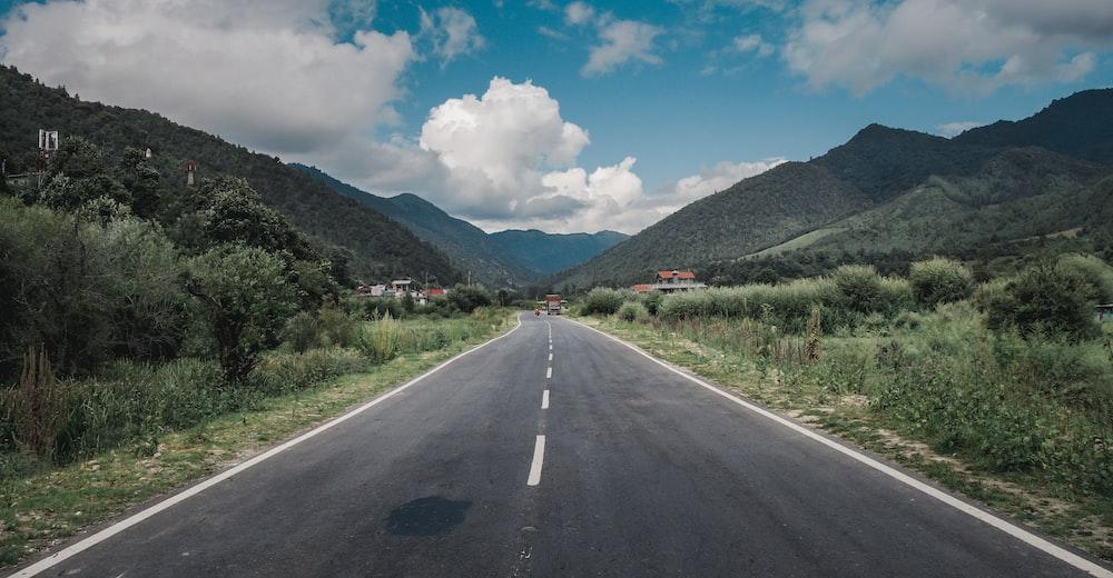 road between plants