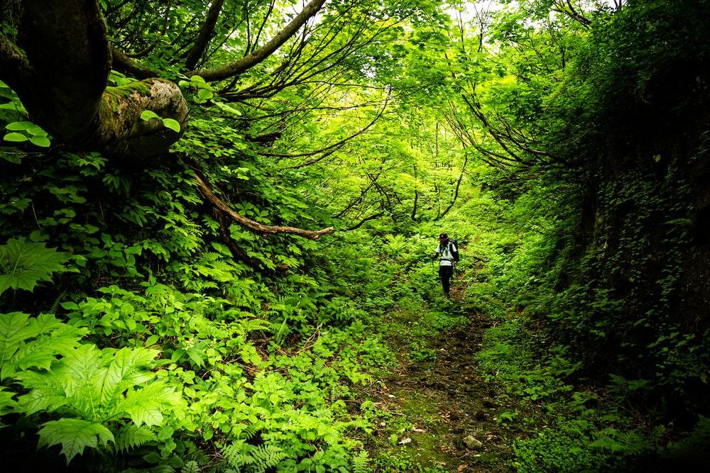 person walking nea trees