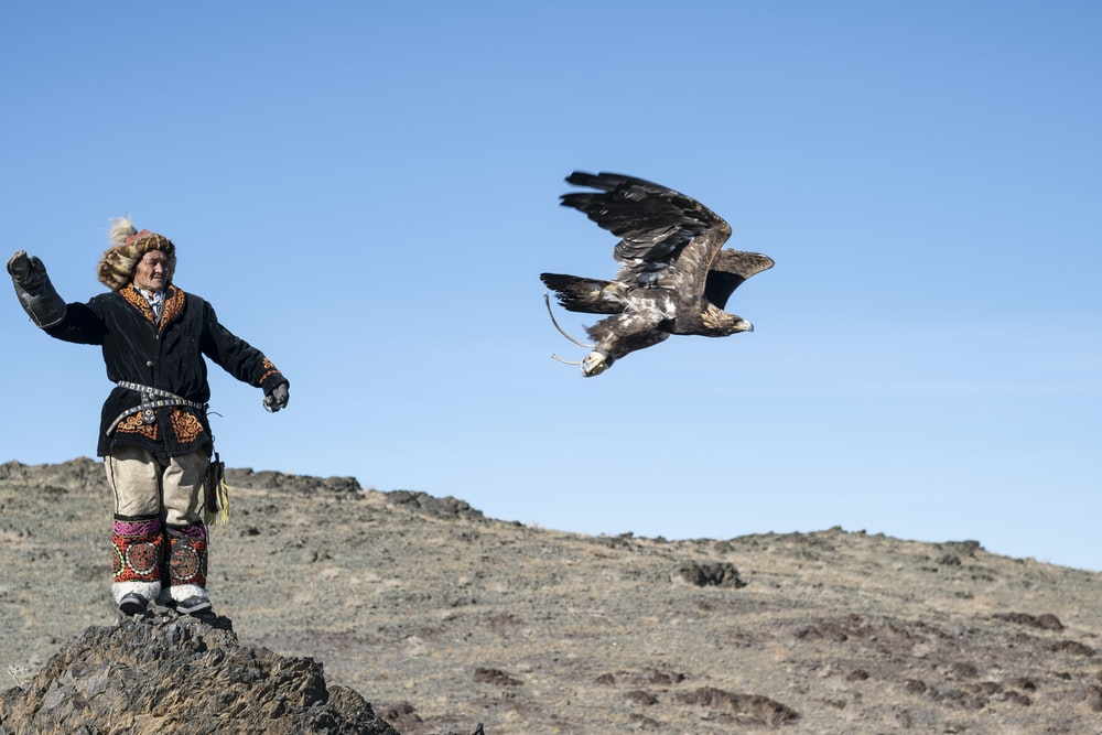 flying eagle near person standing on rock