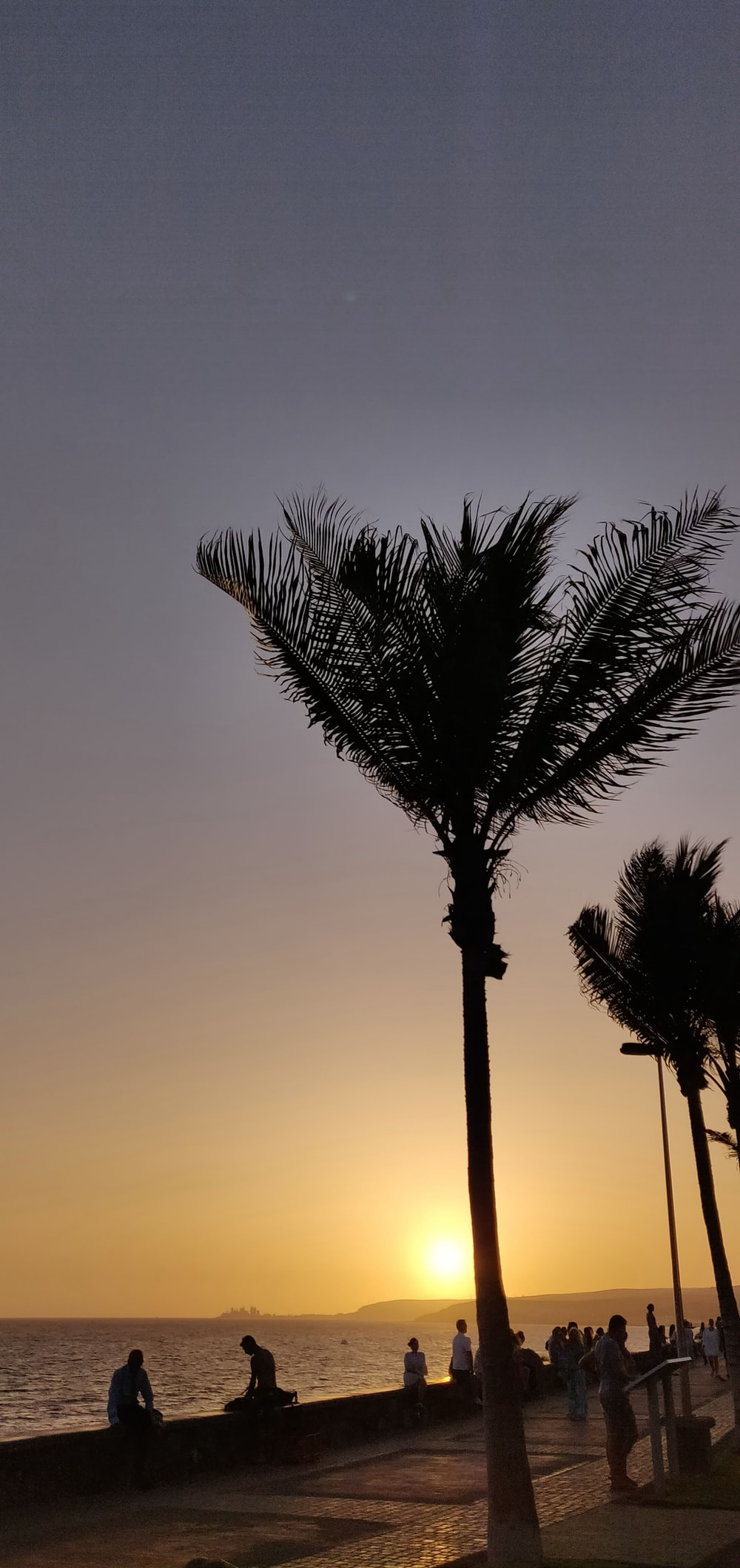 silhouette photo of lined palm trees near sitting people at golden hour