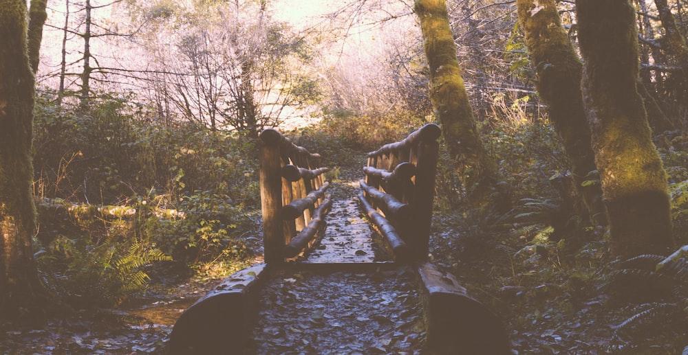 brown wooden bridge between trees at daytime