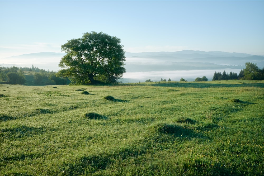 grass and tree covered field