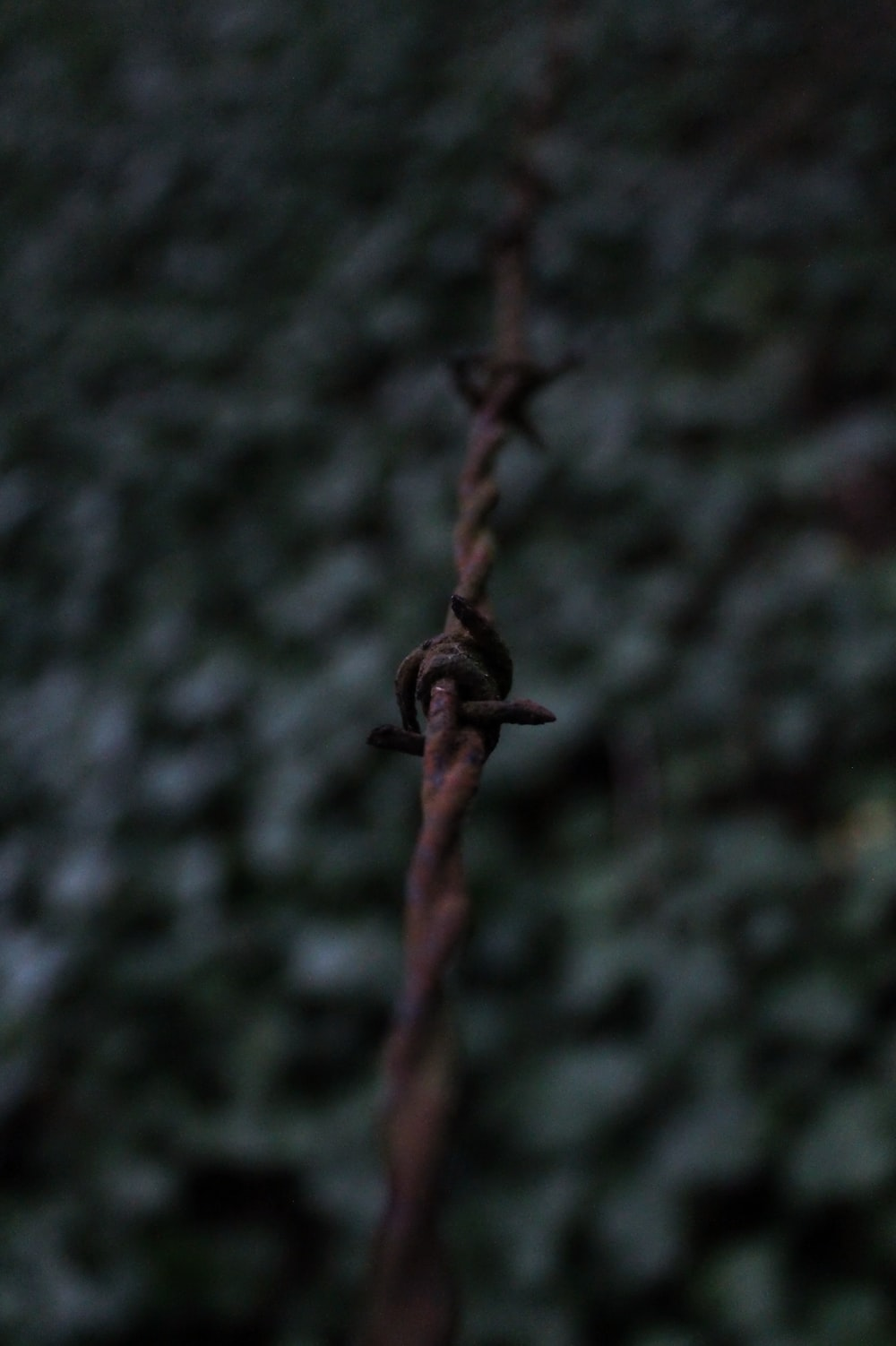 rusty barb wire