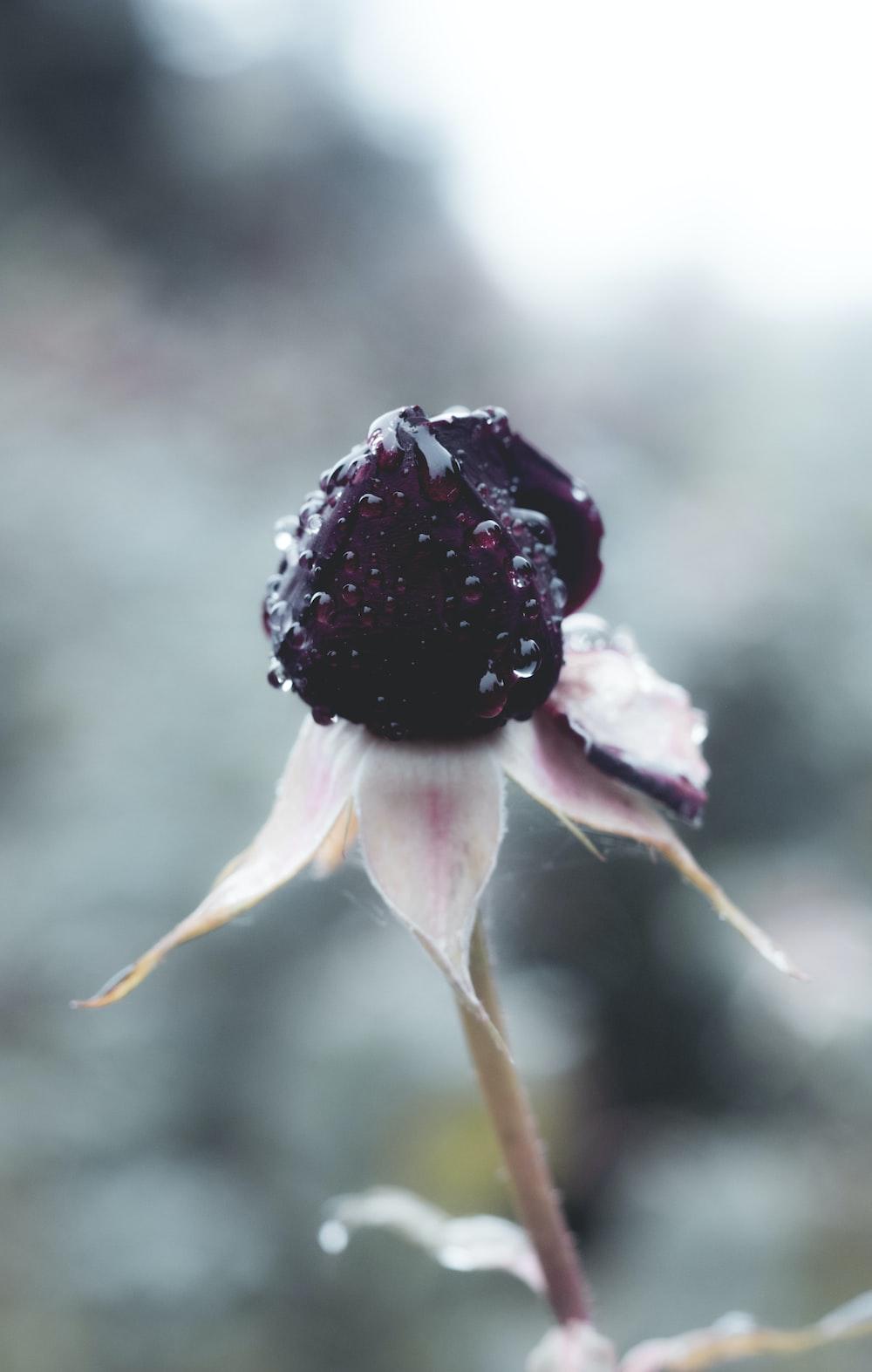 purple petaled flower close-up photo