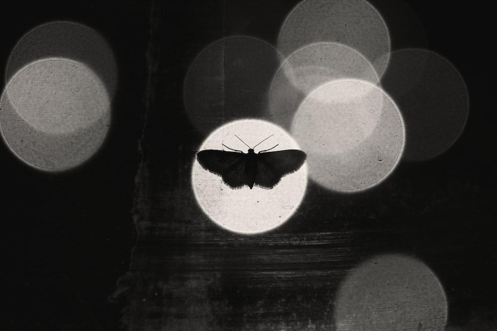 butterfly in light
