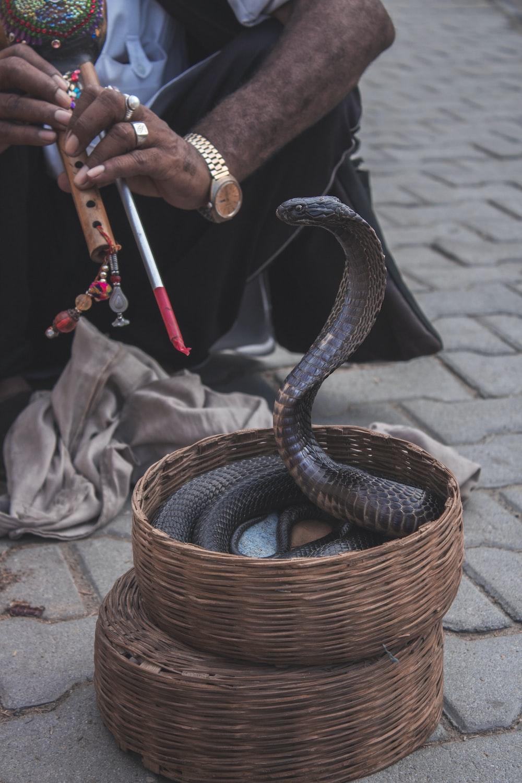 brown snake in basket