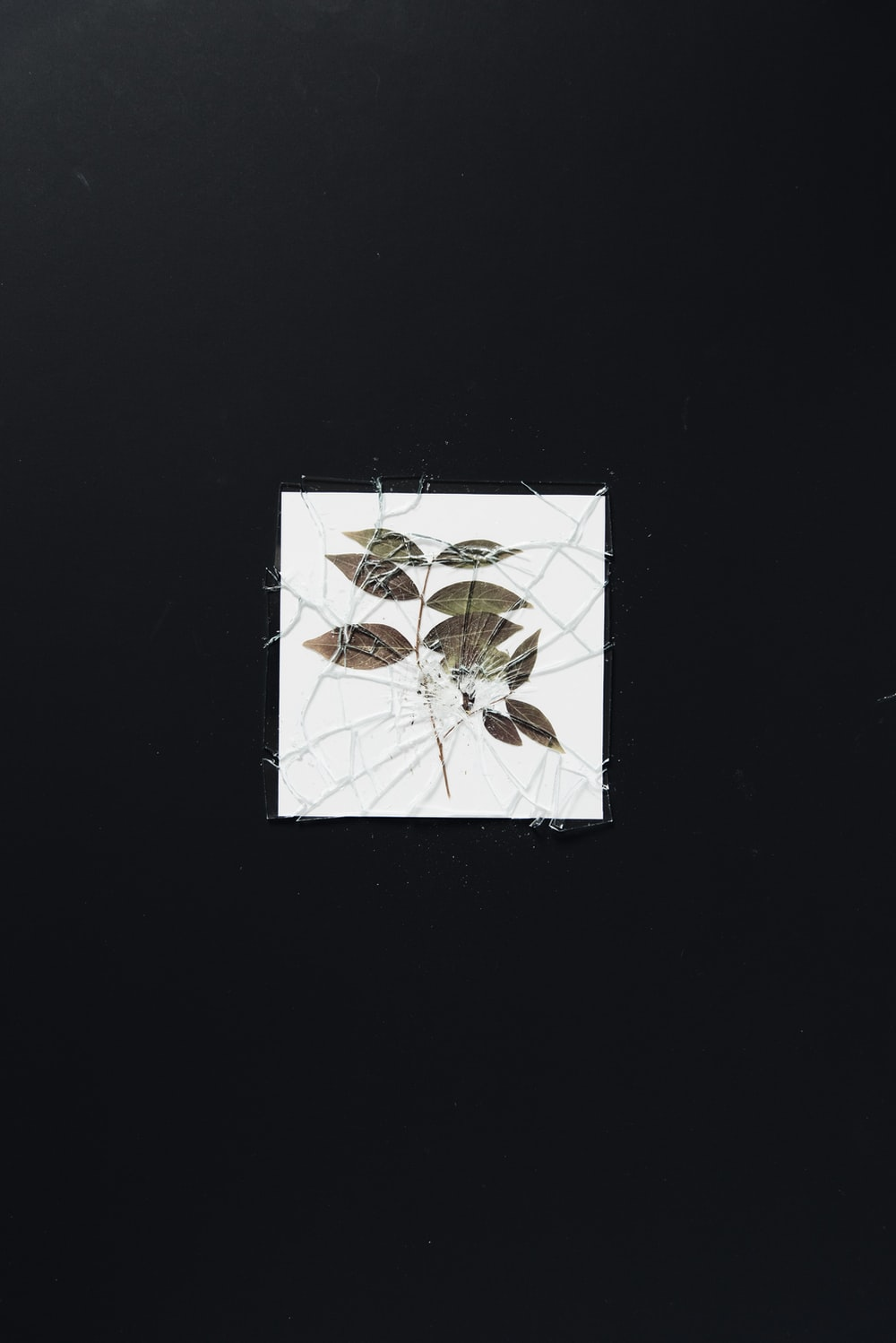 green leaf plant painting
