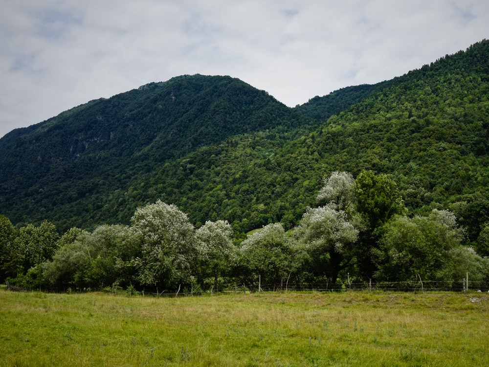 green trees covered hills