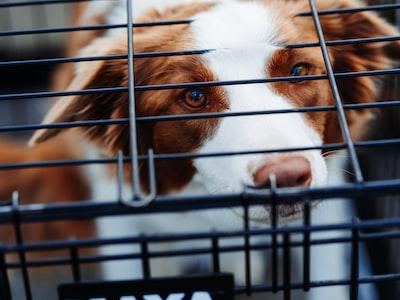 Cina: da Maggionon si mangeranno più cani e gatti