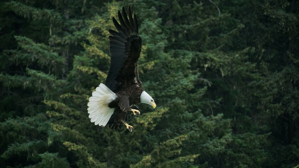 photography of bald eagle during daytime