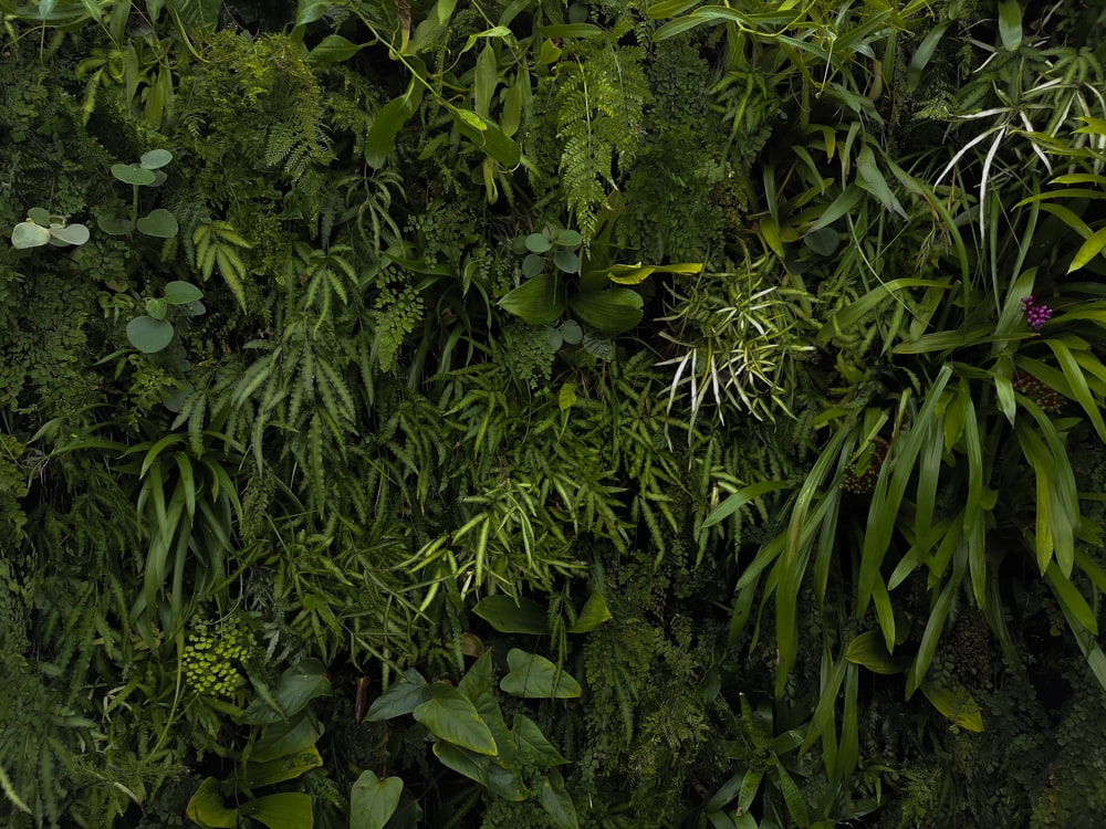green leafed plants and trees