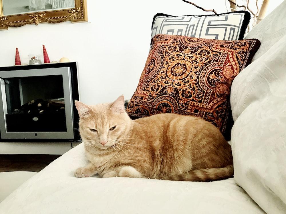 orange cat on sofa