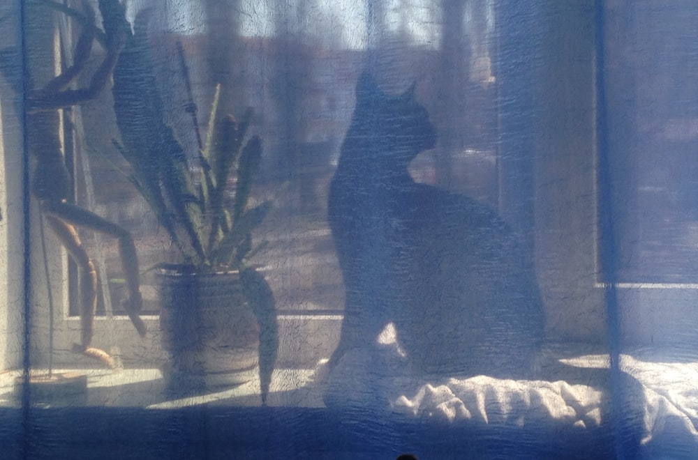 cat near plant