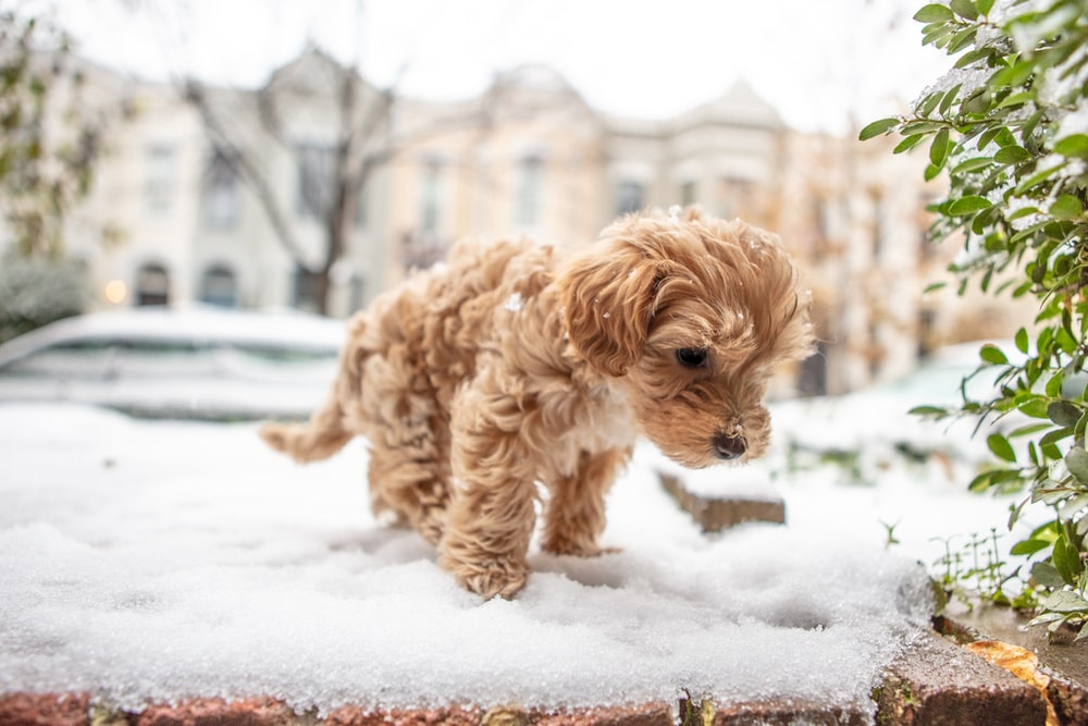 long-coated tan puppy on focus photography