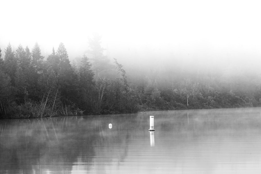 grayscale photography of calm body of water
