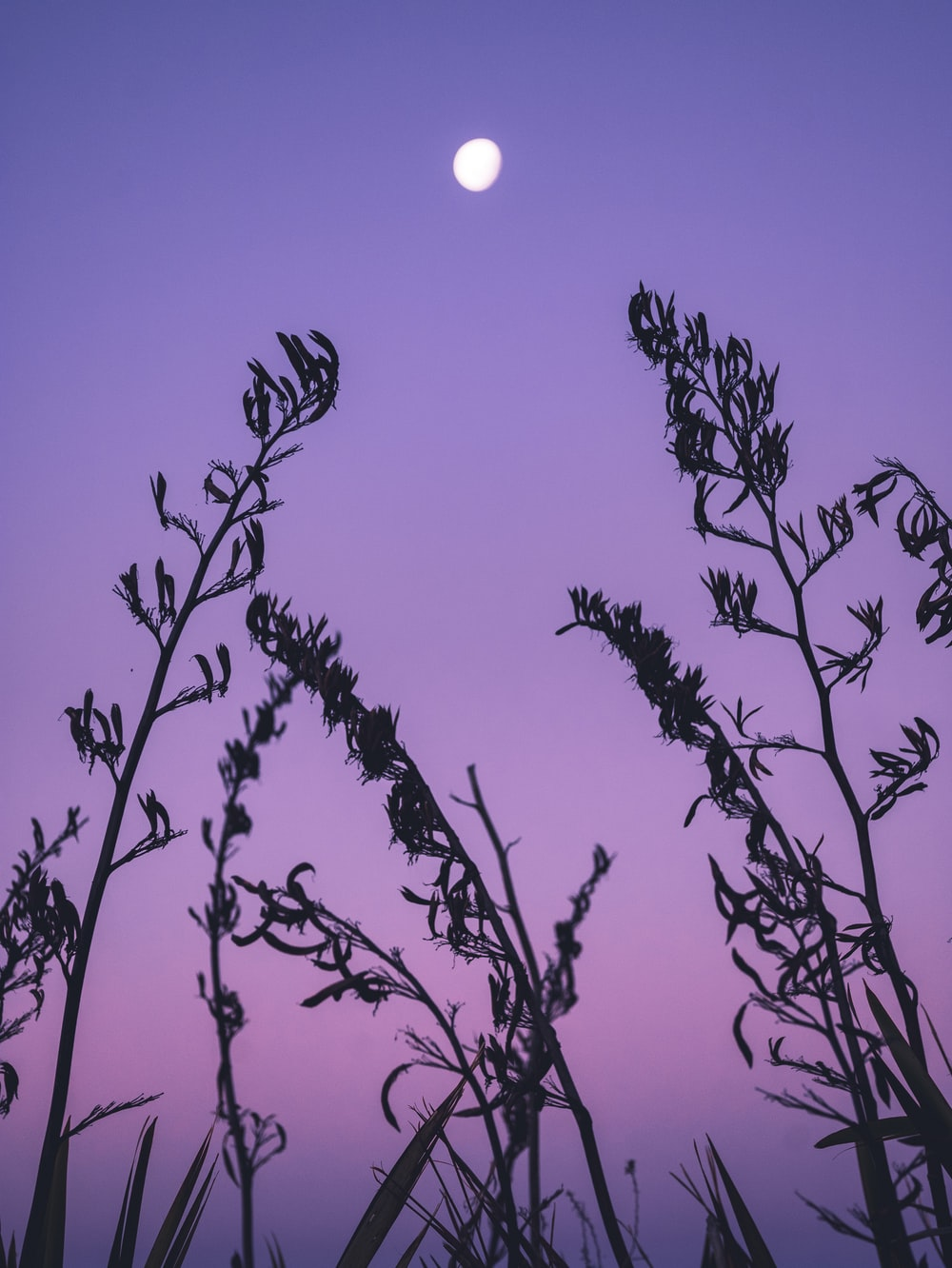 Purple Sunset Pictures Hq Download Free Images On Unsplash