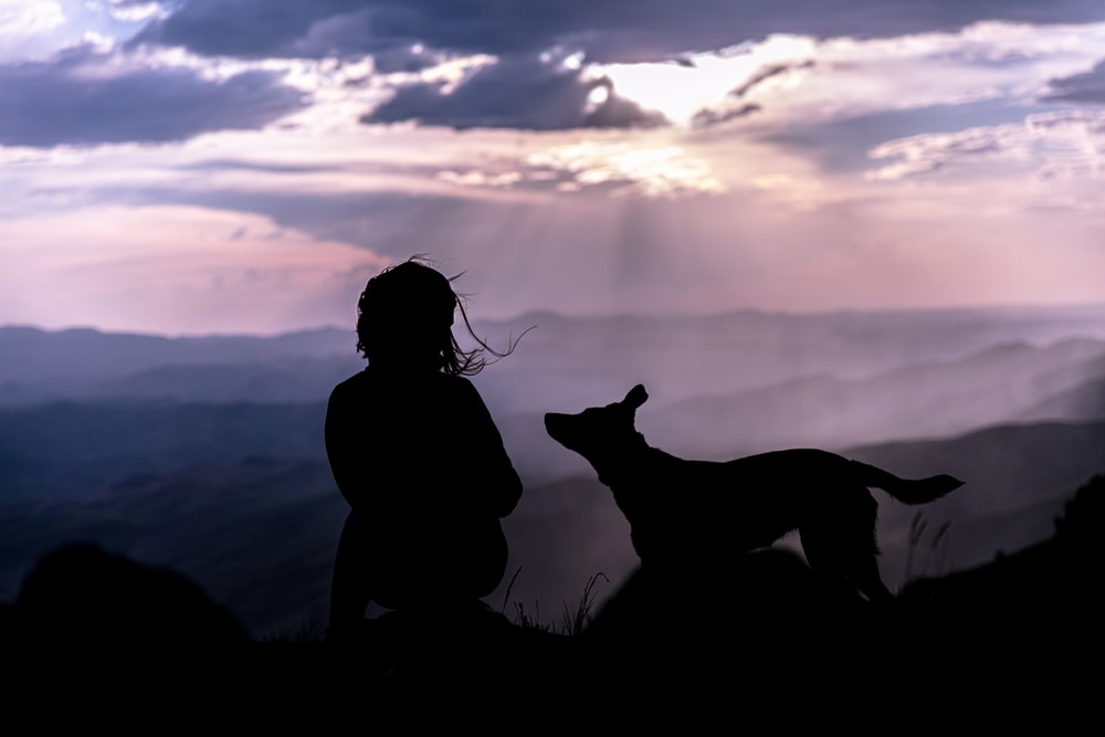 silhouette of person beside dog