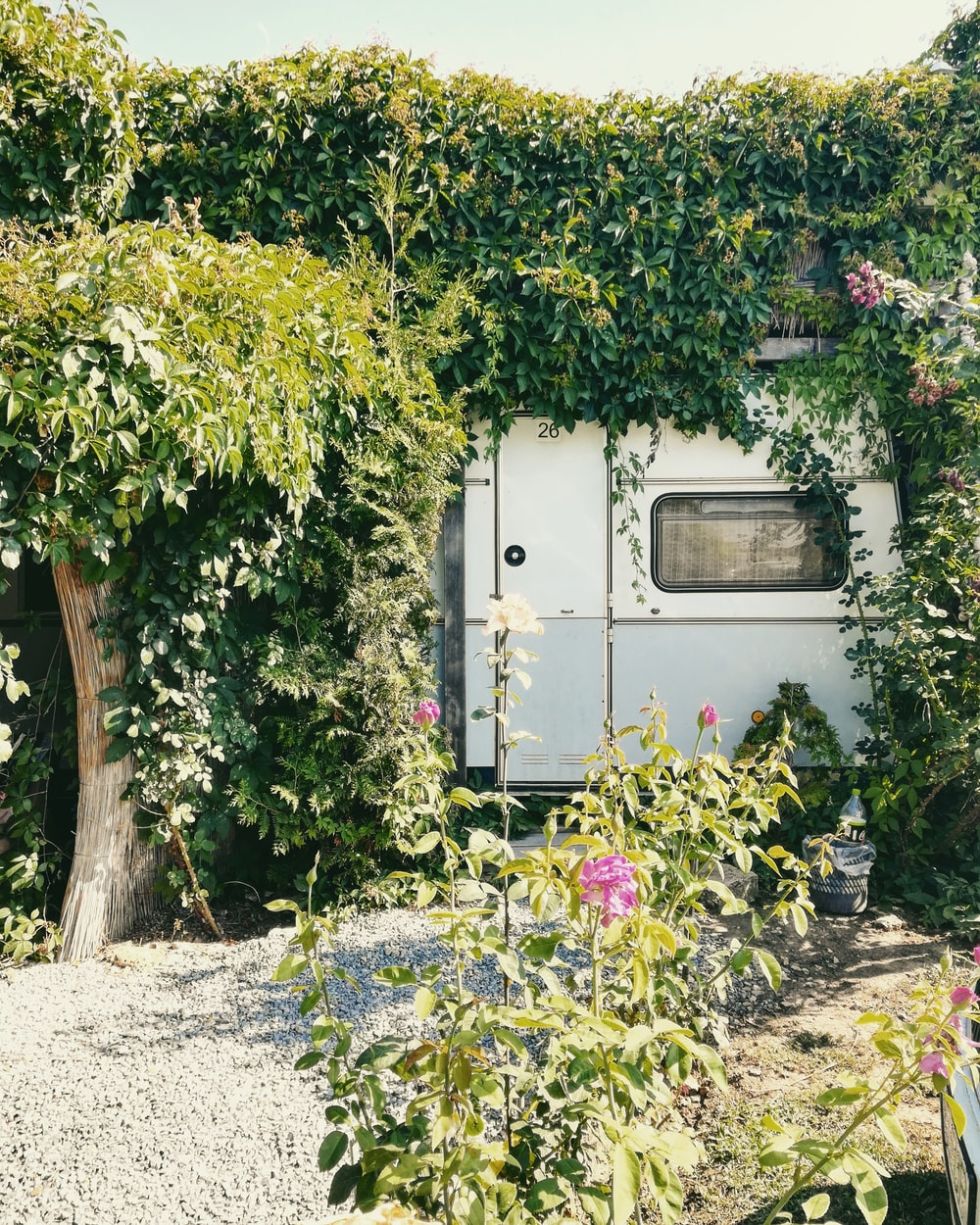 white trailer truck surrounded by green plants