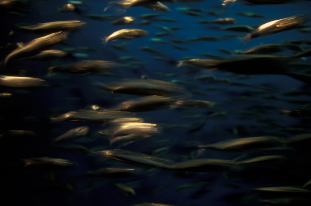 A school of squid underwater