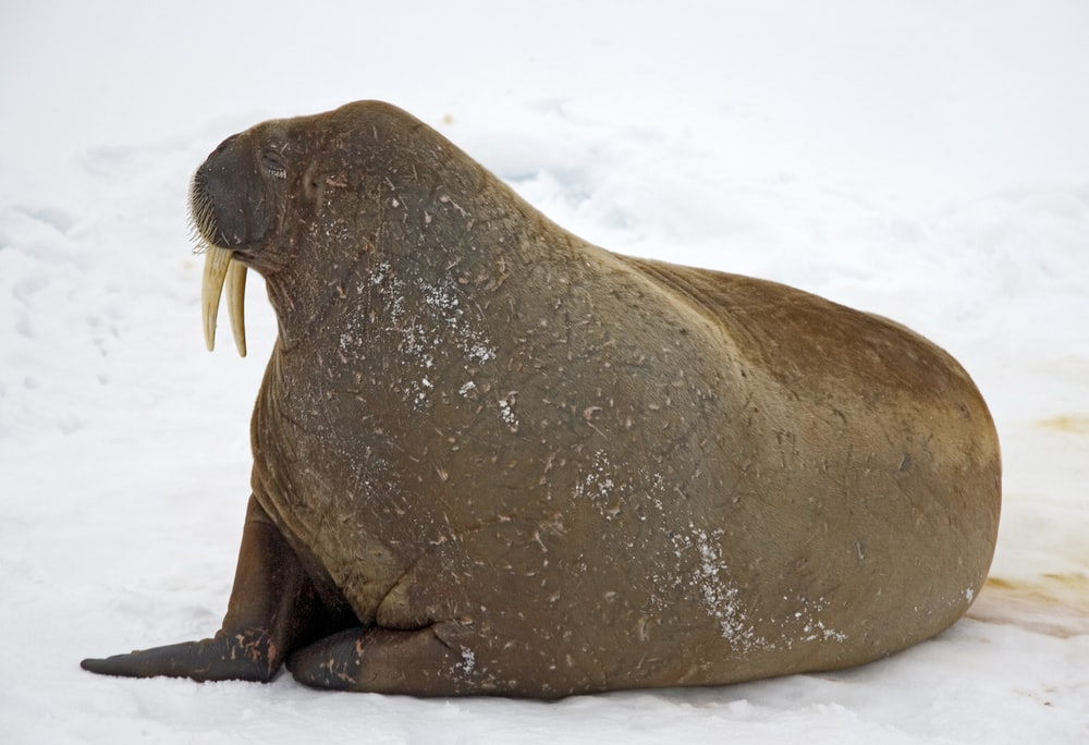 shallow focus photo of seal