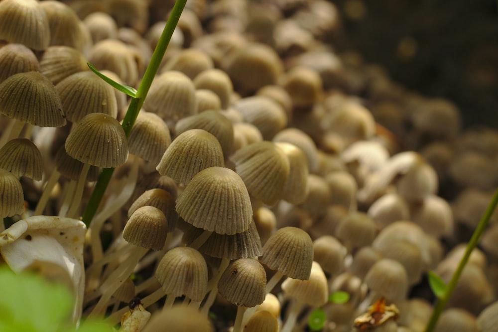 white mushroom close-up photography
