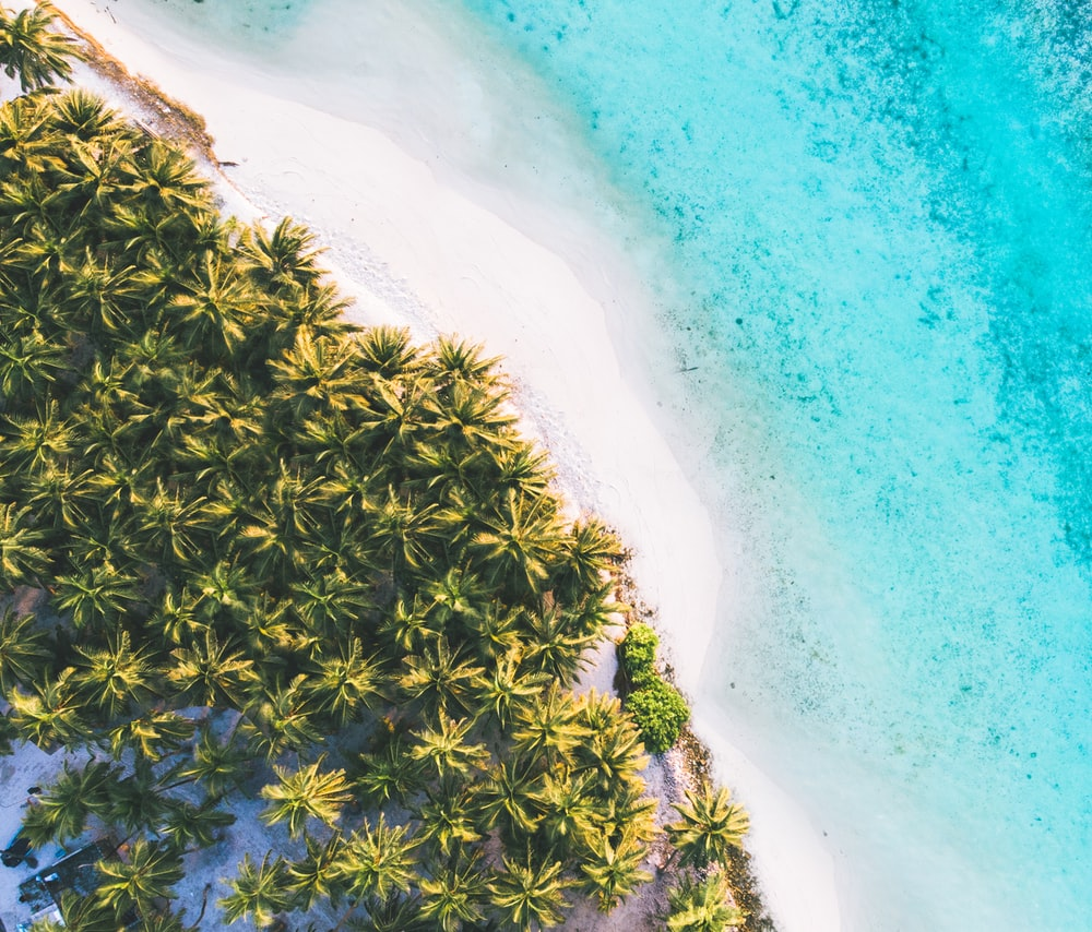 aerial photography trees near body of water