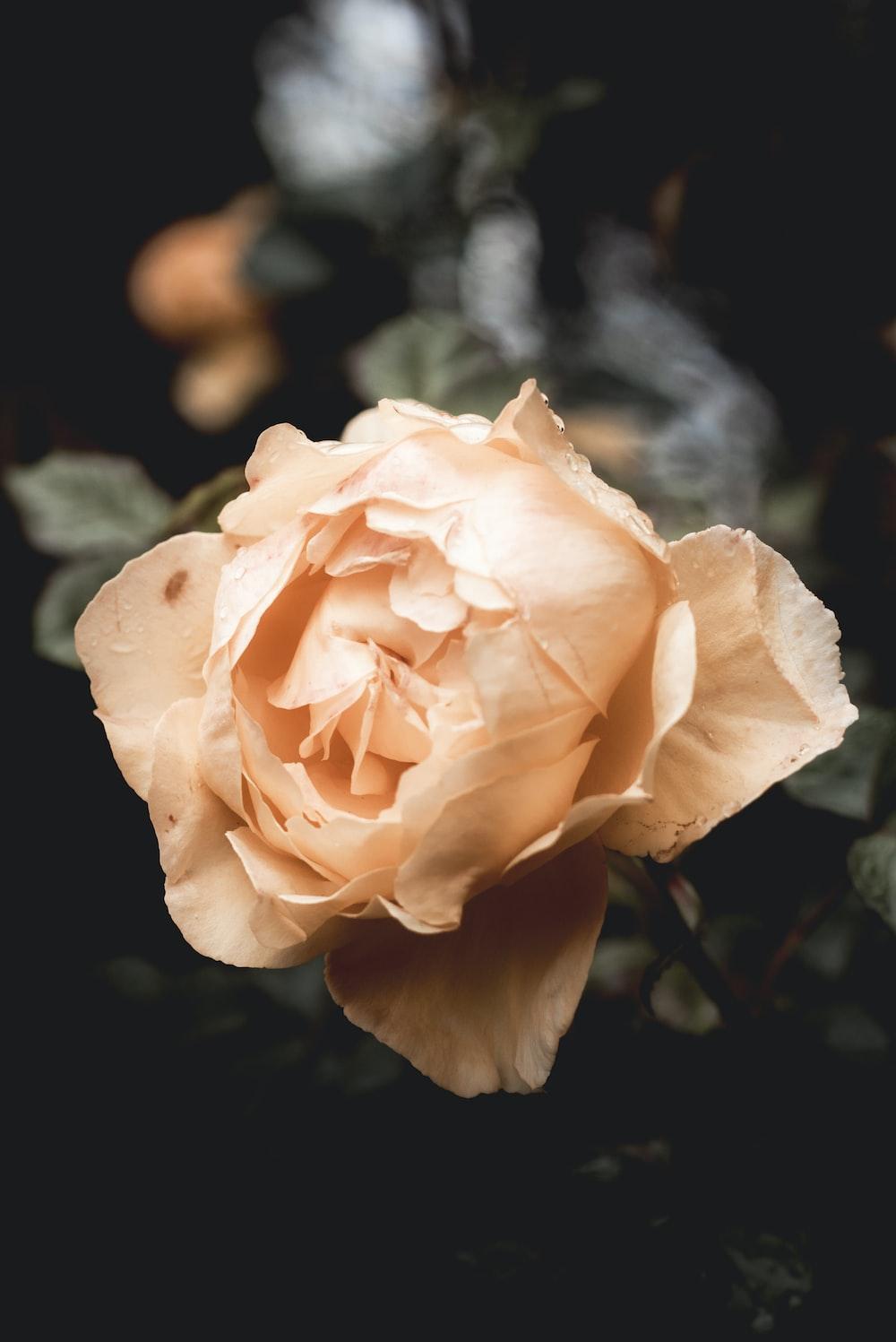 orange petaled flower close-up photography