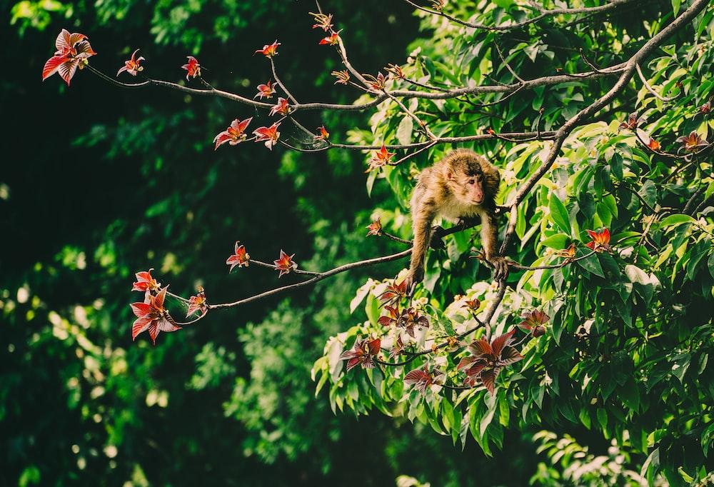 brown monkey on a tree