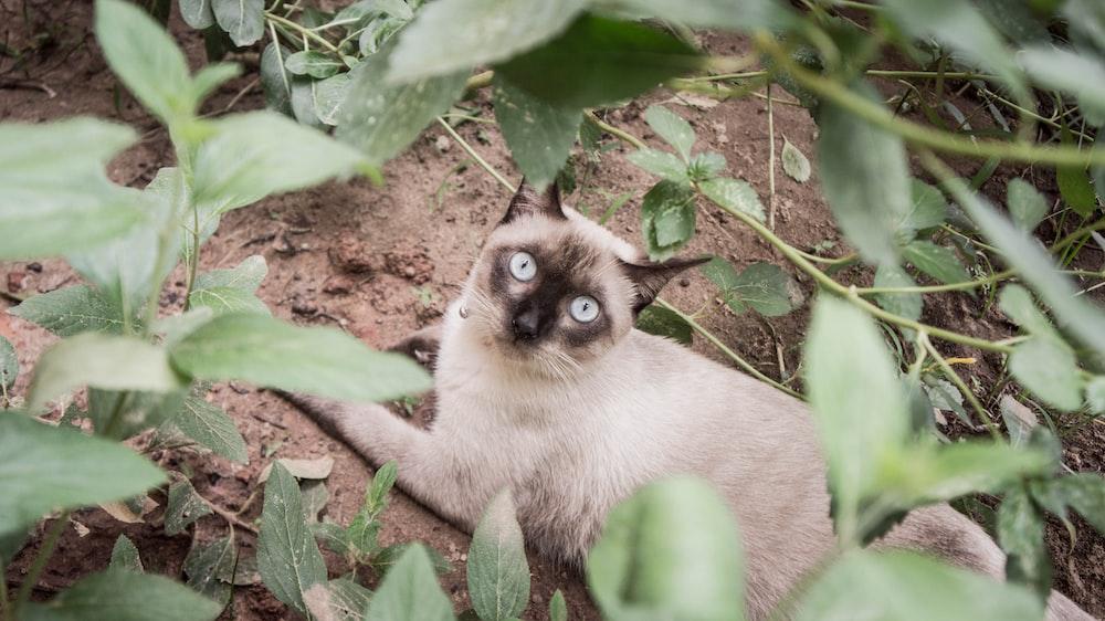 brown and grey cat