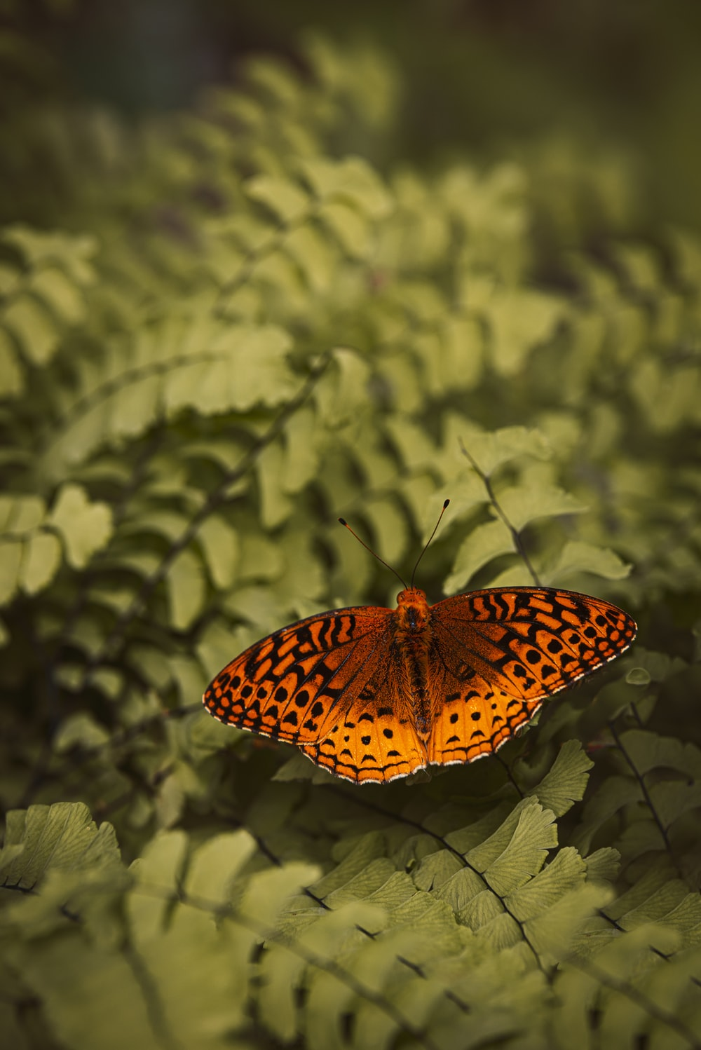 selective focus photography of brown butterfly