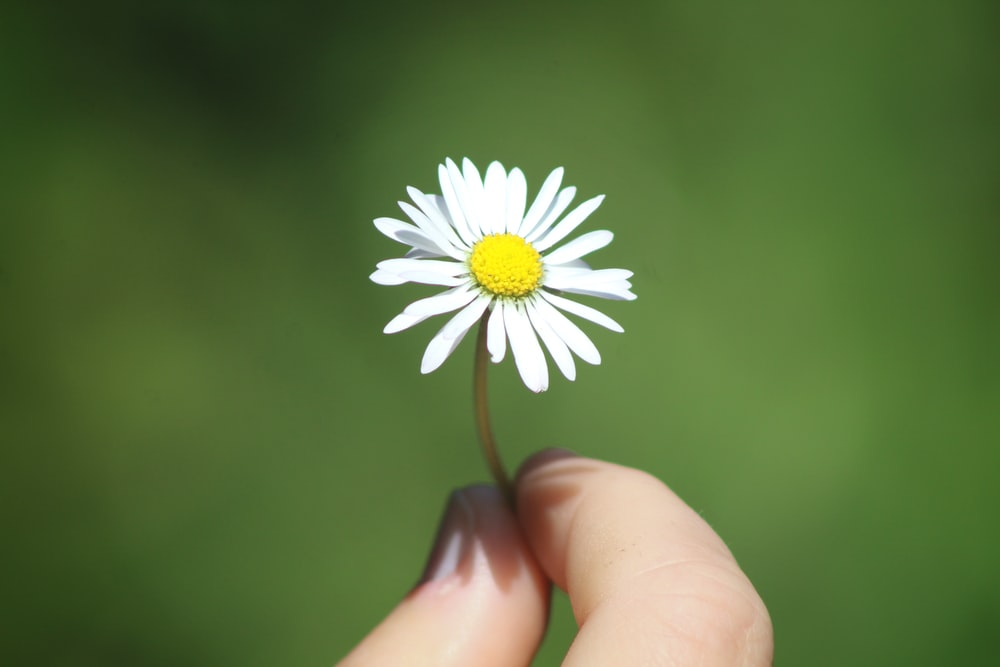 shallow focus photography of white and yellow flower