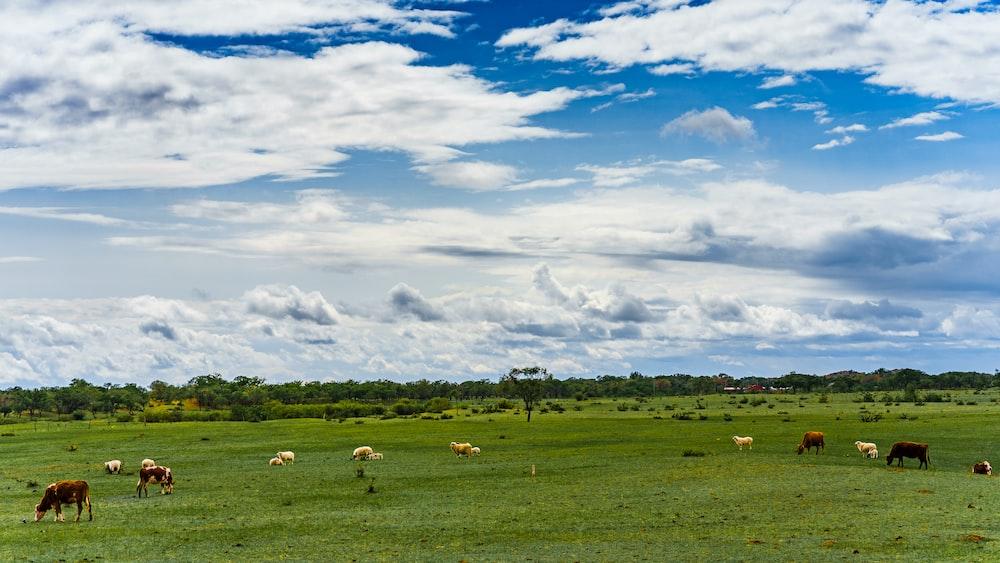 horses on grass field