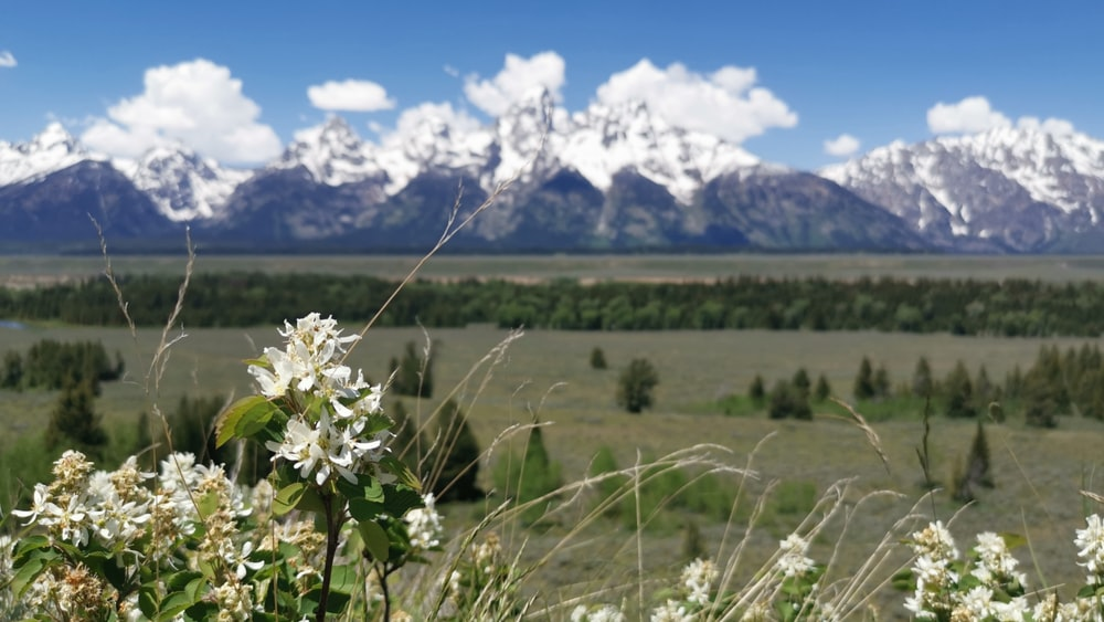 white-petaled flower field