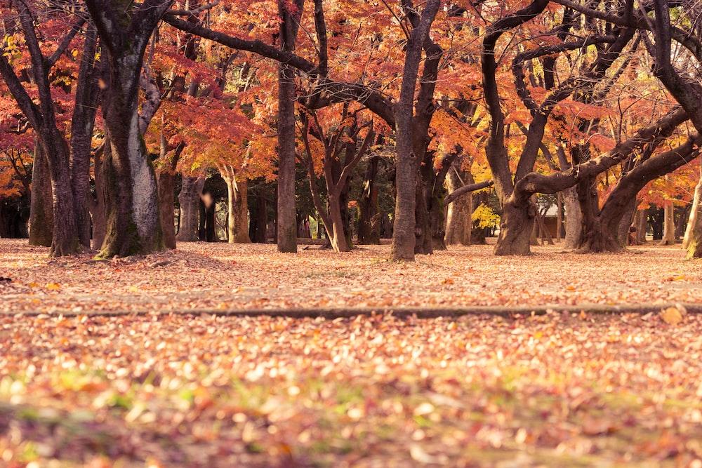 brown trees