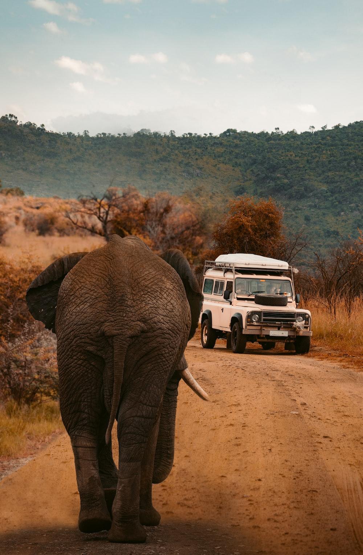 white vehicle near gray elephant