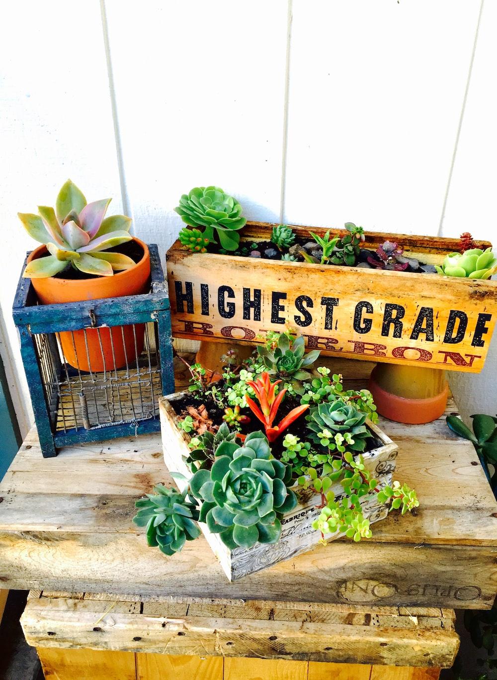 Highest Grade succulent plants on table