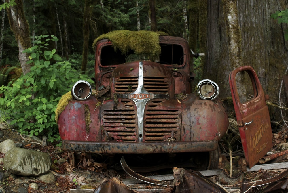 abandoned red Dodge vehicle below the tree