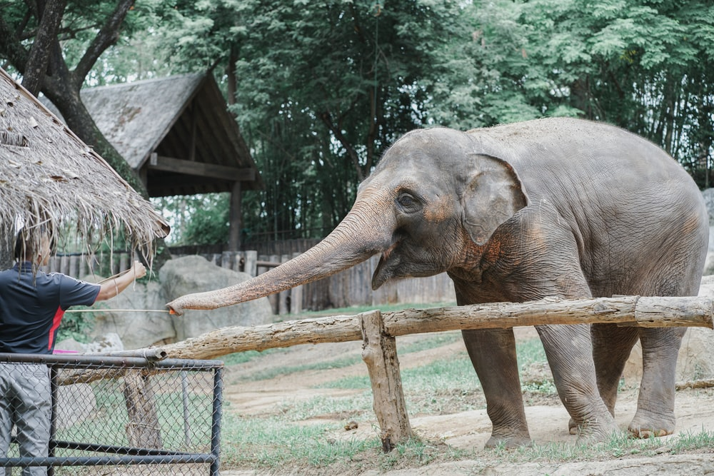 person reaching for elephant's trunk