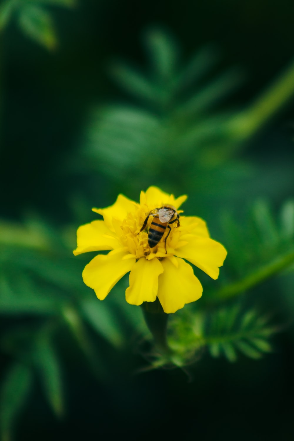 bee perching on yellow petaled flower