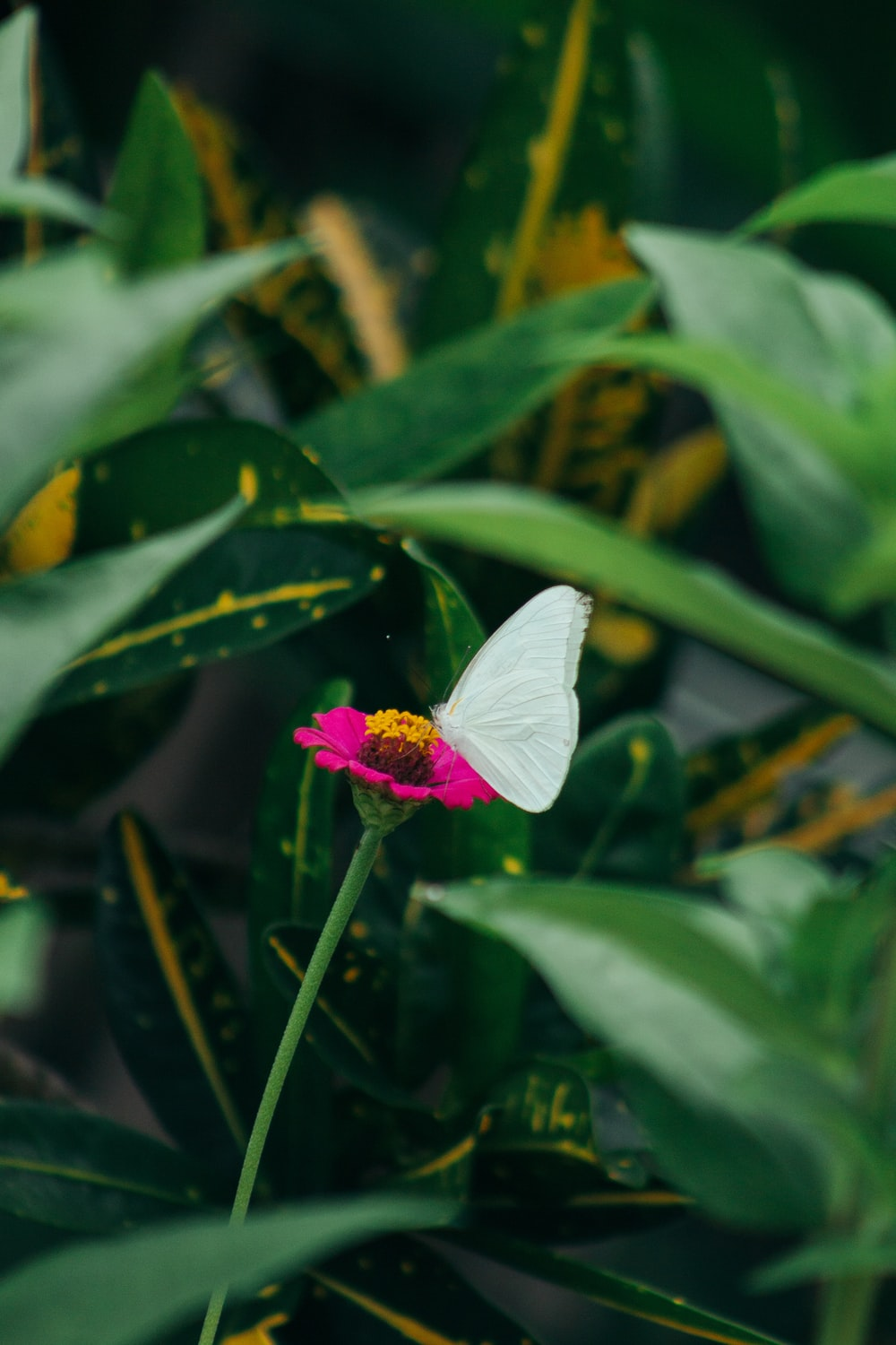 white butterfly on pink flower