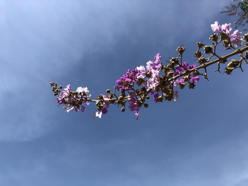 purple petaled flowers blooming at daytime