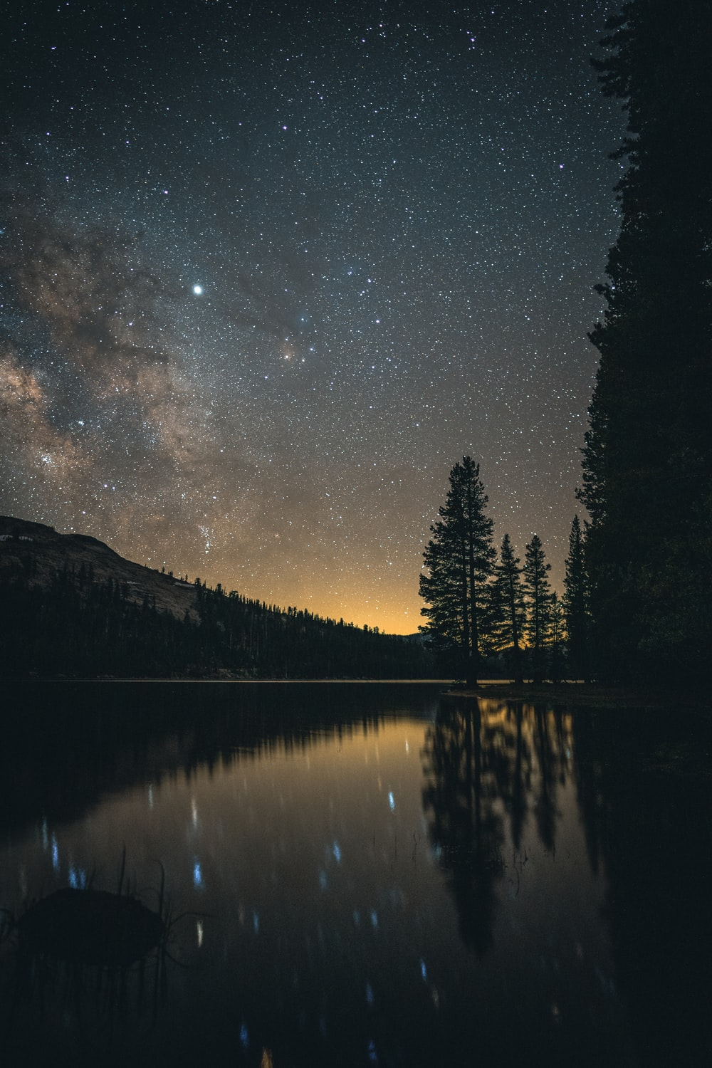 tall trees near body of water at nighttime